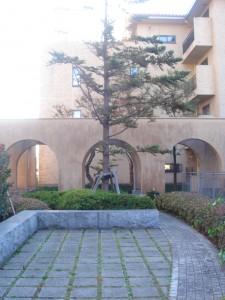 元麻布ヒルズ 庭園4